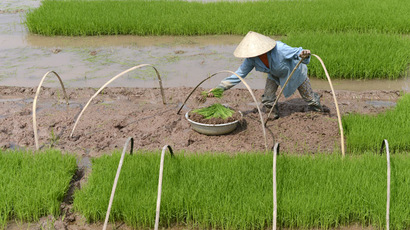 A farmer planting rice on a field (AFP Photo)