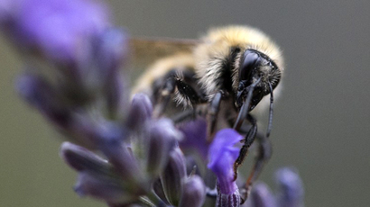5,000 bees chilled, shaved and microchipped in Australian study to prevent killer diseases