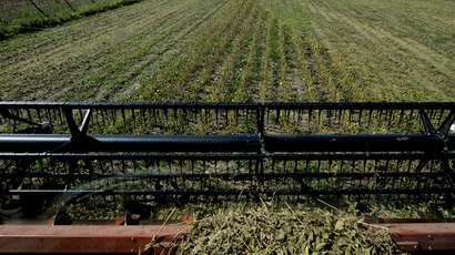 A soybean field in the locality of Perez Millan, 200 km from Buenos Aires, Argentina. (AFP Photo / Daniel Garcia)