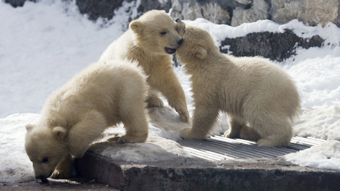 Russian sperm bank for bears: Surrogate grizzly to carry polar cubs