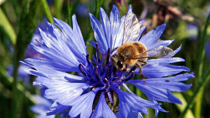 ​US govt's wanton approval of harmful pesticides fueling 'bee holocaust' - lawsuit