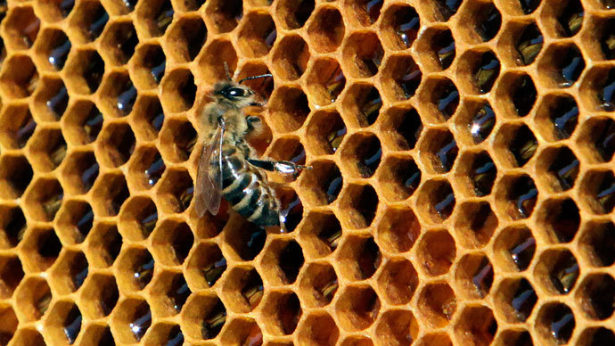 'Beemageddon' linked to tobacco virus - study