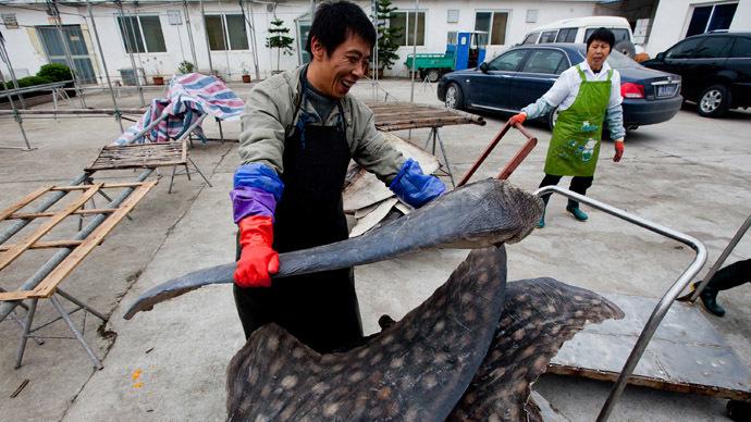 World's rarest shark falls victim to fish oil market