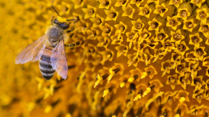 Starving hives: Pesticides cause bees to collect 57% less pollen, study says