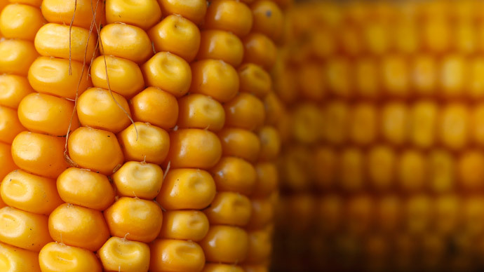 EU ministers link GM crops approval to future elections