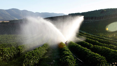 Three-year-old coffee trees are irrigated in a farm in Santo Antonio do Jardim (Reuters / Paulo Whitaker)