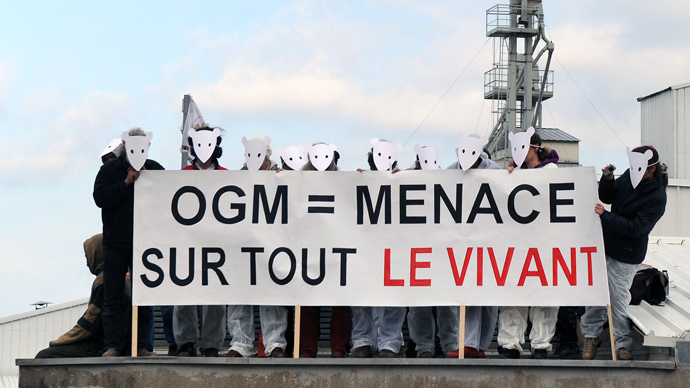 French law temporarily bans GM-maize planting while larger ban gains steam