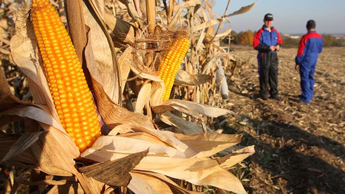 Duma seeks moratorium on GMO production in Russia