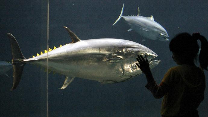 Deepwater Horizon oil spill cause fatal heart defects in tuna - study