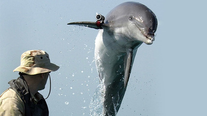 New Zealand govt accused of opening world's rarest dolphin's habitat to oil & gas drilling