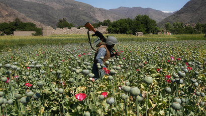 An Afghan policeman destroys poppies during a campaign against narcotics in Kunar province, April 29, 2014 (Reuters / Parwiz)