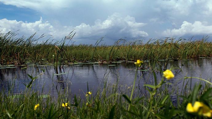 Illegal 'fracking-like' oil drilling halted in ecologically-sensitive Everglades