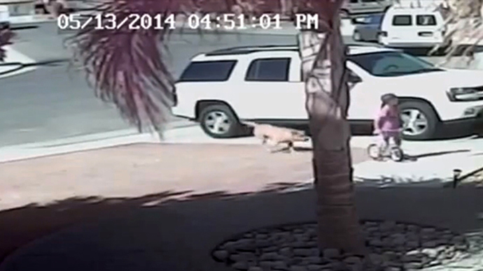 #HeroCat fights off vicious dog to save CA toddler (VIDEO)