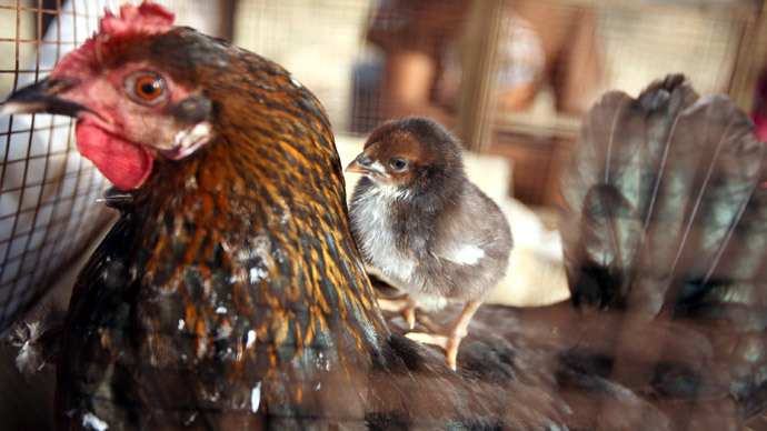 EU bans poultry imports from Israel-occupied West Bank