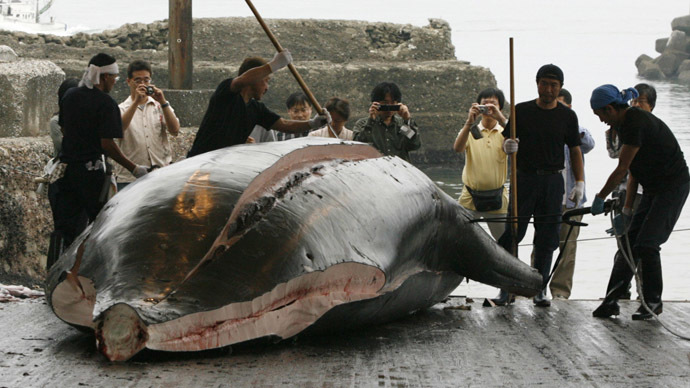 Japan kills 30 minke whales in 'research' campaign following intl court ban