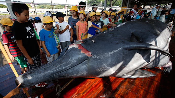 Grade school students look at a Baird's Beaked whale before it was carved at Wada port in Minamiboso, southeast of Tokyo June 26, 2014 (Reuters / Issei Kato)