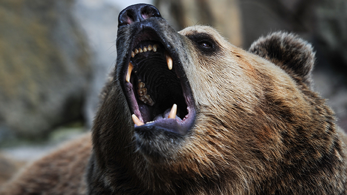 Caged Bear Bites Off 5yo S Hand In Southern Russia Rt News