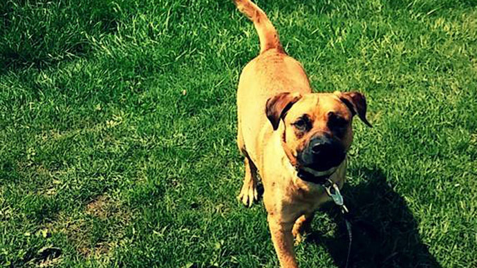 Police officer fired for killing dog in front of 6-year-old owner