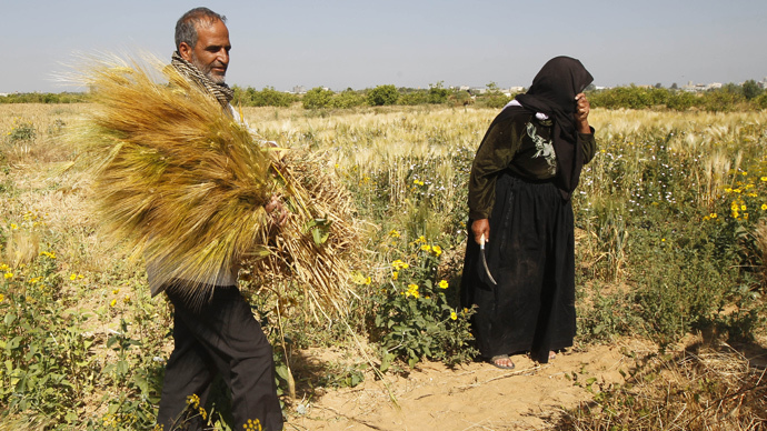 Gaza agriculture devastated by Israeli offensive – UN
