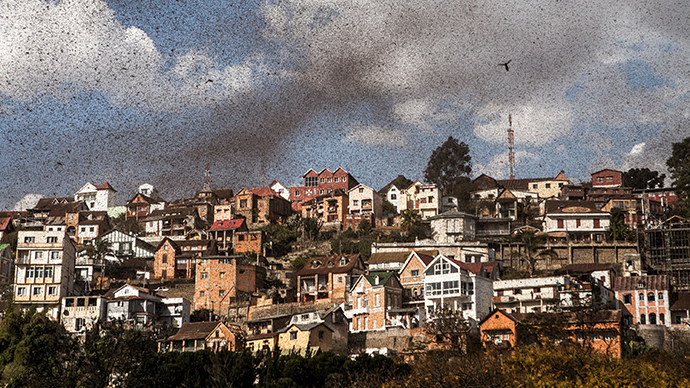 A swarm of locusts invades the center of Madagascar capital Antananarivo on August 28, 2014. (AFP Photo / Rijasolo)