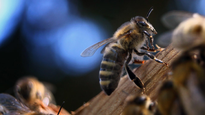 Canadian beekeepers' sting: Pesticide giants sued for $450mn over bee deaths