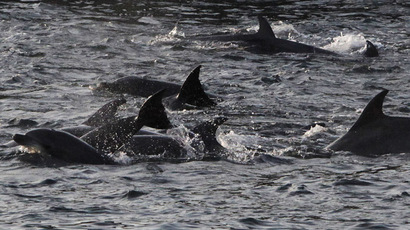 Aquatic Facebook junkees: Dolphins have complex social networks & communities