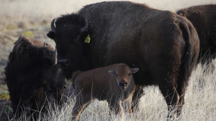 E Buffalo Channel Buffalo Treaty: Native...