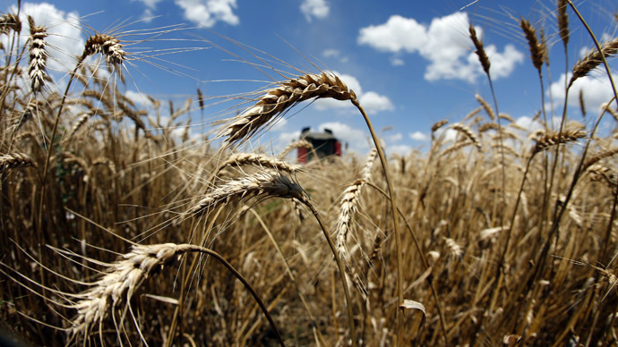 Monsanto GMO wheat contamination discovered in Montana
