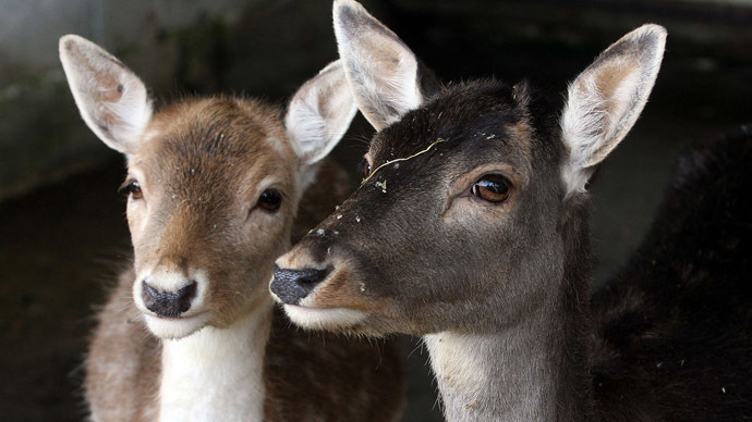 Oh deer outrage as zurich zoo puts animals on menu rt - Colorazione pagine animali zoo ...