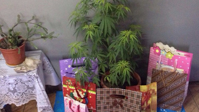 Chile police seize 6-foot-tall pot 'Christmas tree' in drug raid