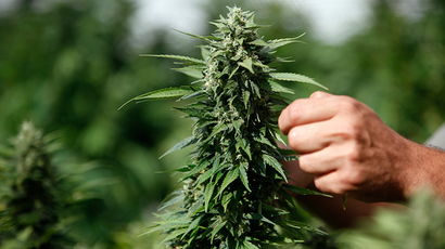 ​Pot-ential profits: Over 100 Native American tribes seek to grow marijuana