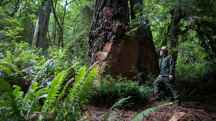 Scientists blame climate change for world's biggest trees dying