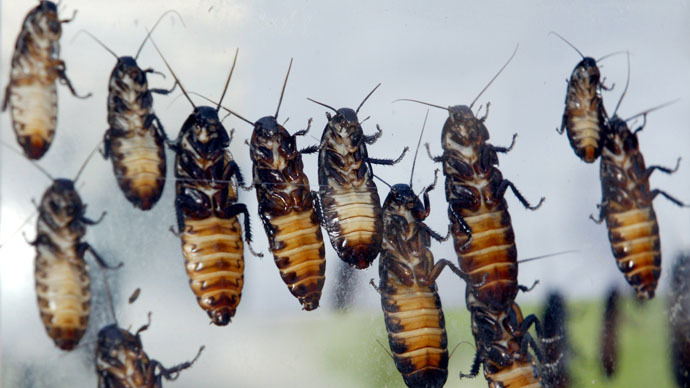 Angry with an ex? Adopt a cockroach or scorpion in their honor