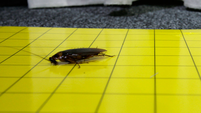 Cockroaches have different personalities, new study proves