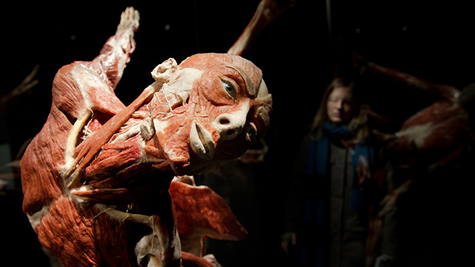 "A visitor looks at plastinated human bodies during a press preview prior to the opening of ""Body Worlds"" permanent exhibition by German anatomist Gunther von Hagens at the Menschen Museum in Berlin February 17, 2015 (Reuters / Stefanie Loos)"