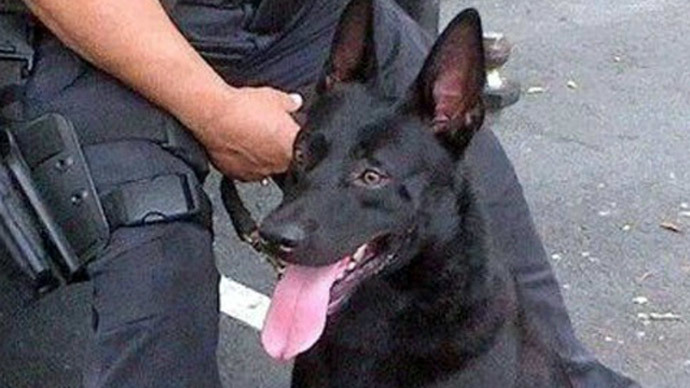 Police dog fired after doughnut shop attack