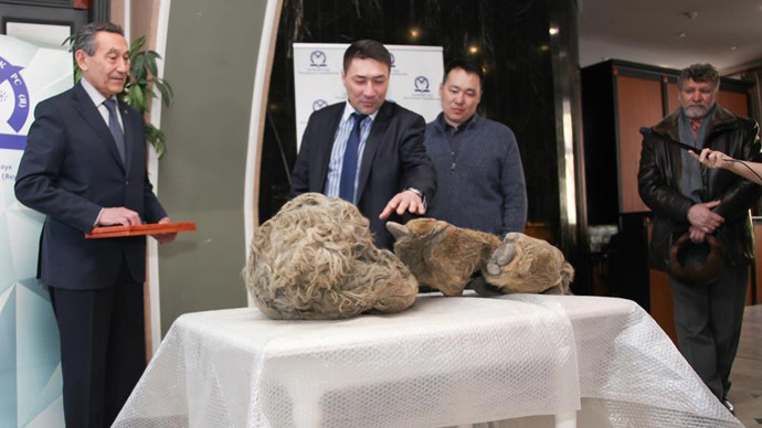 10,000yo 'Sasha': Hunters discover world's 1st baby woolly rhino in Siberian permafrost