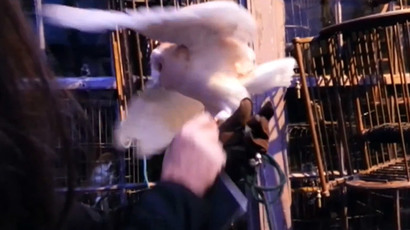 'Stay magical, not cruel!' Harry Potter owls mistreated at Warner studio tour, PETA says