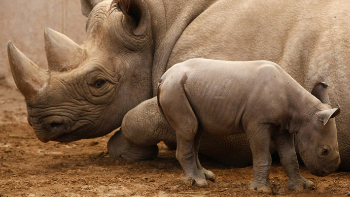 ​Endangered black rhino trophy can be imported, US wildlife agency says