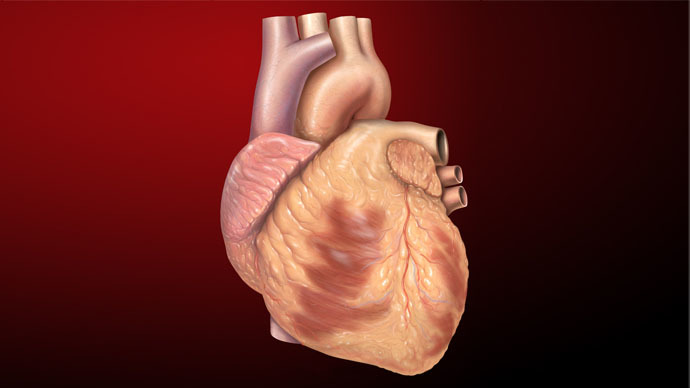 Scientists discover revolutionary method to regrow heart muscles