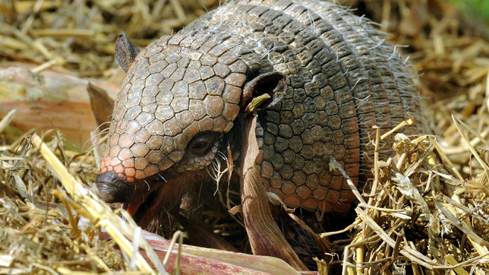 Shell shock: Shot meant for armadillo ricochets into mother-in-law