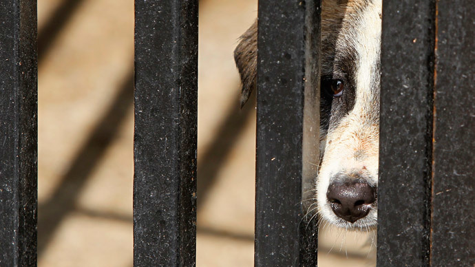 'Disturbingly inventive': Animal abuse reaching abhorrent new lows