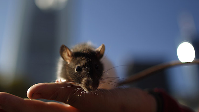 Drought spurs rodent problems across California