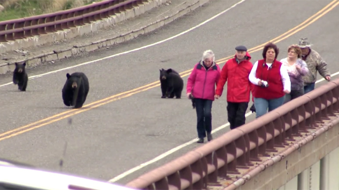 Black bears give chase to tourists at Yellowstone National Park (VIDEO)