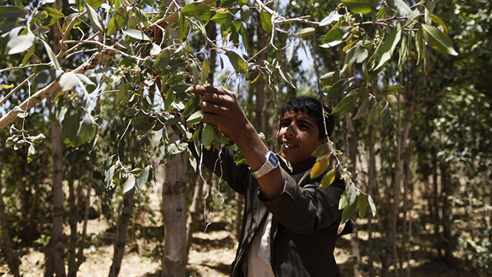 Al-Qaeda taking on policing role in east Yemen banning qat leafs