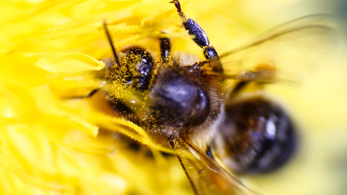 ​Beemageddon: White House reveals national strategy to tackle honeybee decline