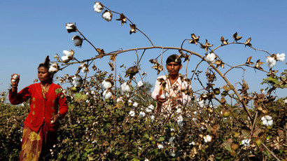 GMO that kills: GM-cotton problems drive Indian farmers to suicide