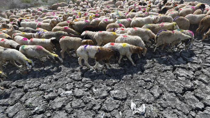 Sheep cross a parched area of a dried-up pond on a hot summer day on the outskirts of New Delhi, India, May 27, 2015. (Reuters / Anindito Mukherjee)