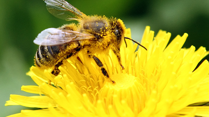 ​'Bees with Alzheimer's?' Aluminium pollution linked to dementia in bees