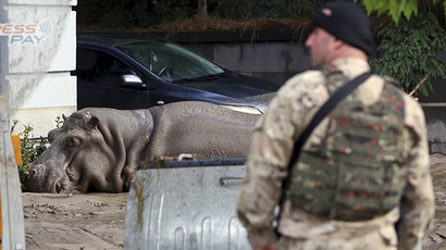 A serviceman stands near a hippopotamus at a flooded street in Tbilisi, Georgia, June 14, 2015 (Reuters / Beso Gulashvili)